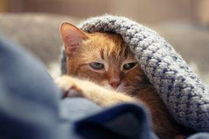 История одного кота, которого оставили хозяева