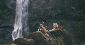 История о том, как тигрица человека поблагодарила за еду