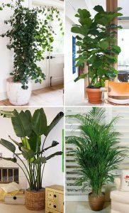 Топ секретов, как вырастить здоровые и красивые декоративные растения