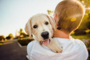 — Тетя, вам не нужен щенок? — робко сказал 12-летний мальчик